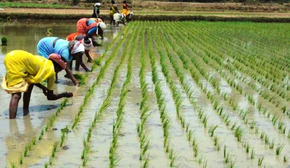 agricultural land for sale in tamilnadu agricultural land in india